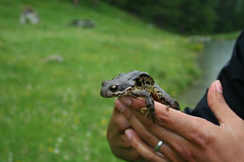 2016-07-02 frogg