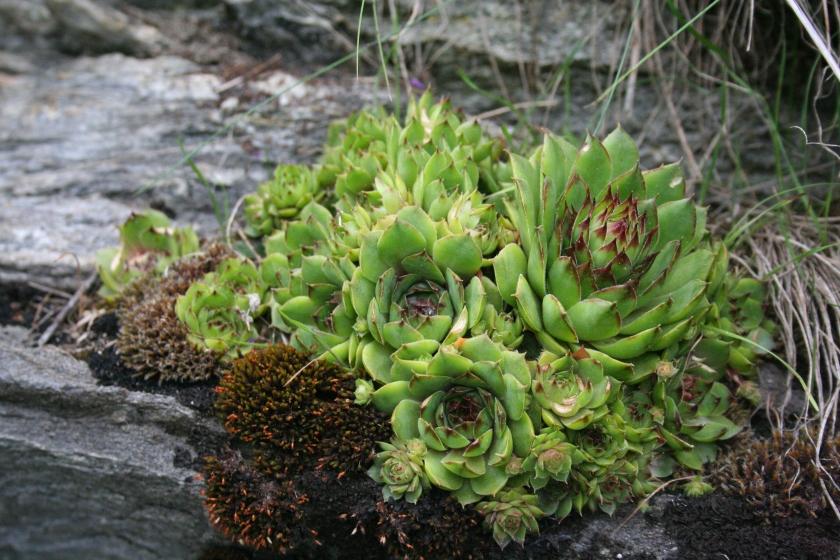 2016-07-02 succulente